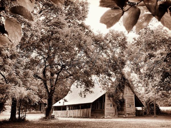 Historic Beech Grove Barn Art | K. Randall Wilcox Fine Art
