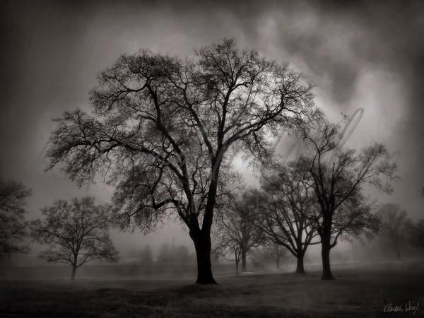 Foggy Oaks Art | K. Randall Wilcox Fine Art