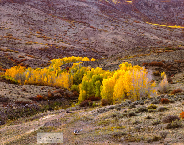 Colorado Gold Photography Art | Lightscape Images