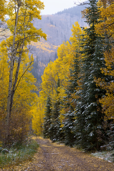Mountain Light Images, aspen trees fall colors colorado cathedral lake trailhead weather