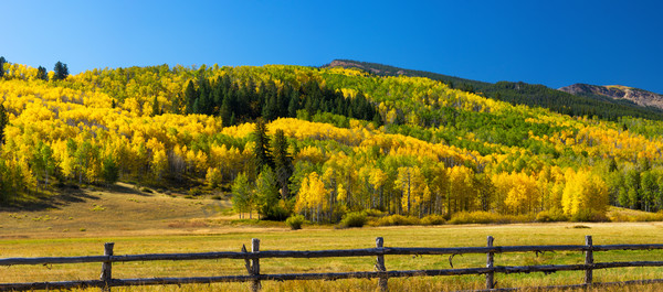 Mountain Light Images, fall, owl-creek, aspen trees colorado nature, fields, fence, brilliant
