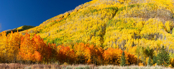 Mountain Light Images, fall color Castle Creek Road Aspen yellow red orange trees brilliant