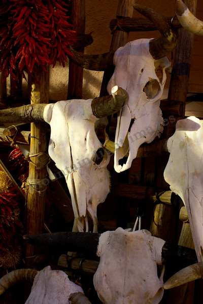 mountain light images cow skulls drying on a rack in taos new mexico back alley