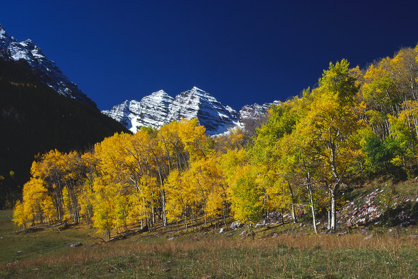 mountain light images the snowy maroon bells seen above fall colored aspen trees under a deep blue sky