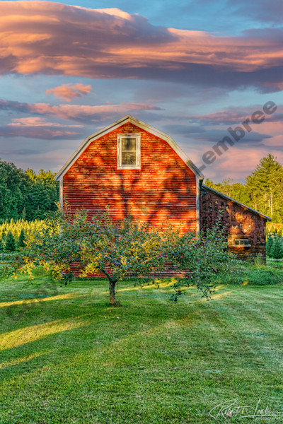 The end of summer in New England brings forth trees full of crisp apples.