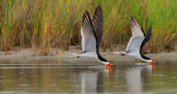 Synchronized Skimming