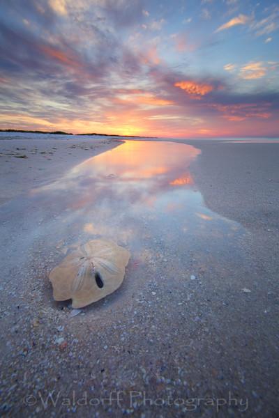 Sand Dollar Sunrise