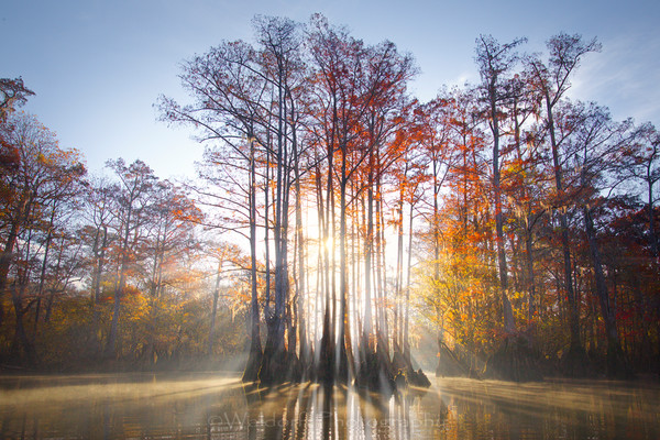 Cypress Trees of Northwest Florida #4 | Fine Art Prints on Canvas, Paper, Metal, & More by Waldorff Photography