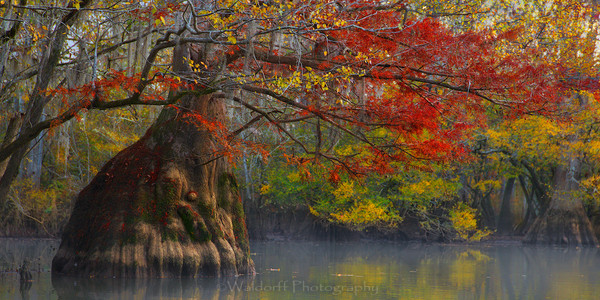 Cypress Trees of Northwest Florida #3 | Fine Art Prints on Canvas, Paper, Metal, & More by Waldorff Photography
