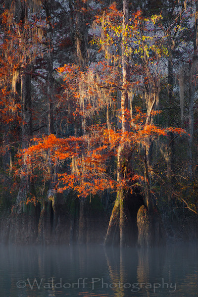 Cypress Trees of Northwest Florida #2 | Fine Art Prints on Canvas, Paper, Metal, & More by Waldorff Photography