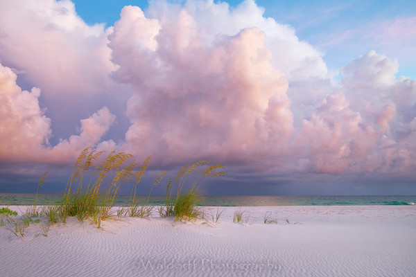 Sea Oats under pink clouds | Emerald Coast, Florida  | Fine Art Landscape Photography on Canvas, Paper, Metal | Photography by Jeff Waldorff