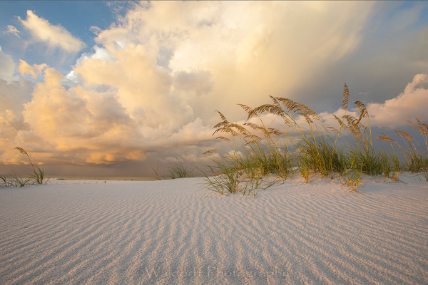 Sea Oats under golden light | Emerald Coast, Florida  | Fine Art Landscape Photography on Canvas, Paper, Metal | Photography by Jeff Waldorff