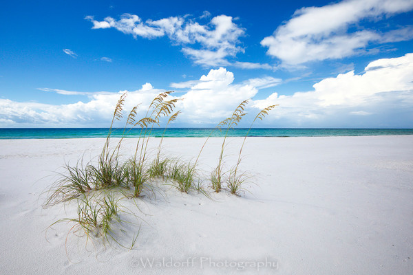 Sea Oats swinging in the wind | Emerald Coast, Florida  | Fine Art Landscape Photography on Canvas, Paper, Metal | Photography by Jeff Waldorff