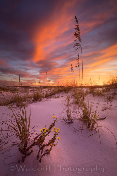Yellow Fall Flowers along the Emerald Coast.