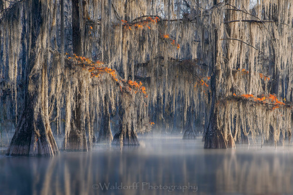 Cypress Trees of Northwest Florida - Forgotten | Fine Art Prints on Canvas, Paper, Metal, & More by Waldorff Photography