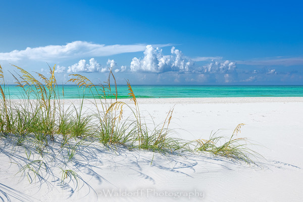 Sea Oats & Emerald Green Water | Emerald Coast, Florida  | Fine Art Landscape Photography on Canvas, Paper, Metal, Acrylic | Photography by Jeff Waldorff