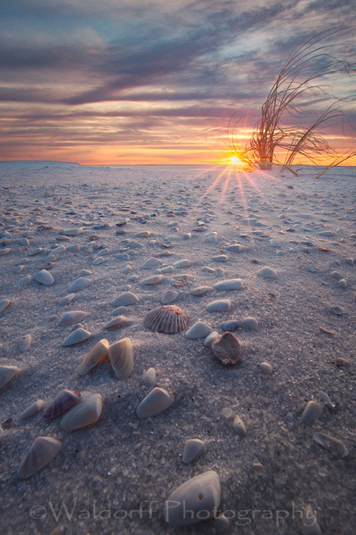 Seashells at Sunrise | Navarre Beach, Florida | Fine Art Landscape Photography on Canvas, Paper, Metal | Photography by Jeff Waldorff