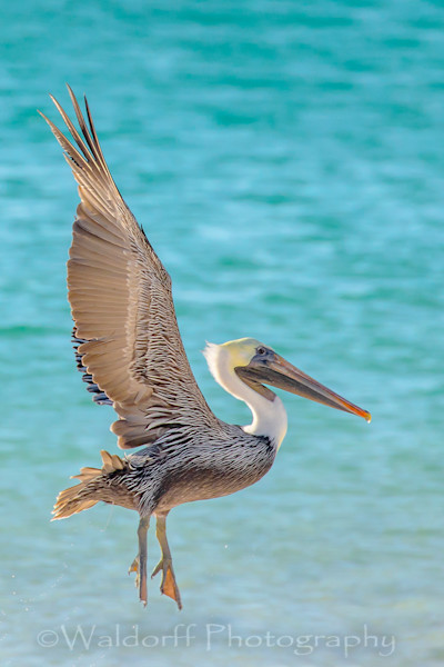 Florida's Birds Fine Art Photographs - Fine Art Prints on Canvas, Paper, Metal, & More
