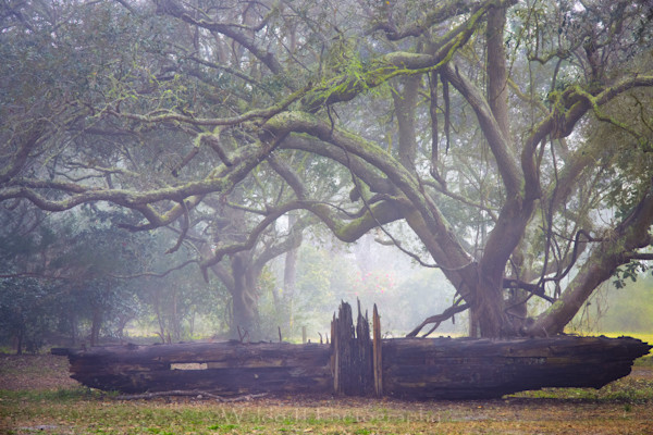 Live Oaks Trees #1 of Northwest Florida | Gulf Breeze, FL | Fine Art Prints on Canvas, Paper, Metal, & More by Waldorff Photography.