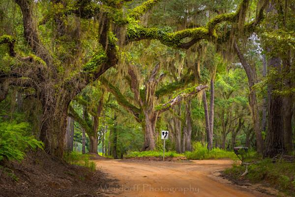 Dueling Oak Photography Art | Waldorff Photography