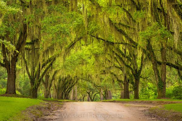 Old Magnolia Rd #1 Photography Art | Waldorff Photography