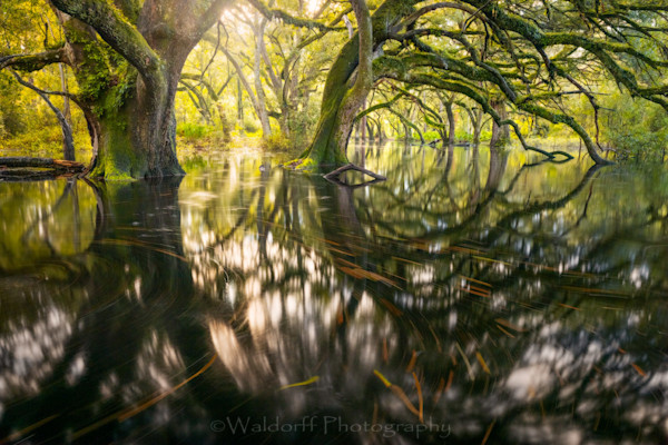 Flooded Oak Garden Photography Art | Waldorff Photography