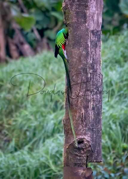 Costa Rica 6742 2 Edit Output Art | dougbusby