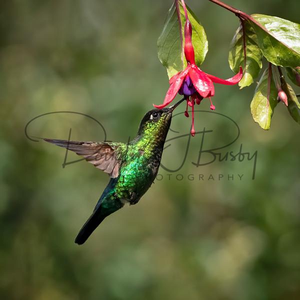 Costa Rica 8247 Edit Output Art | dougbusby