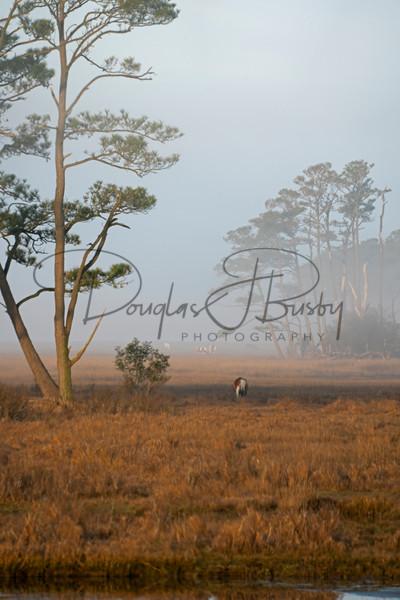 Chicoteague And North Carolina 0771 Edit Output Art | dougbusby