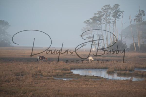 Chicoteague And North Carolina 0917 Edit Output Art | dougbusby