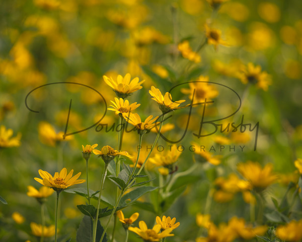 Shawnee Park 1452 Edit Output Art | dougbusby