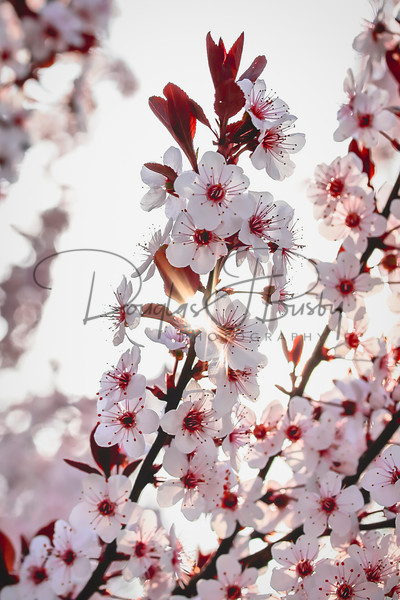 Spring Flowers 0687 Edit Output Art | dougbusby