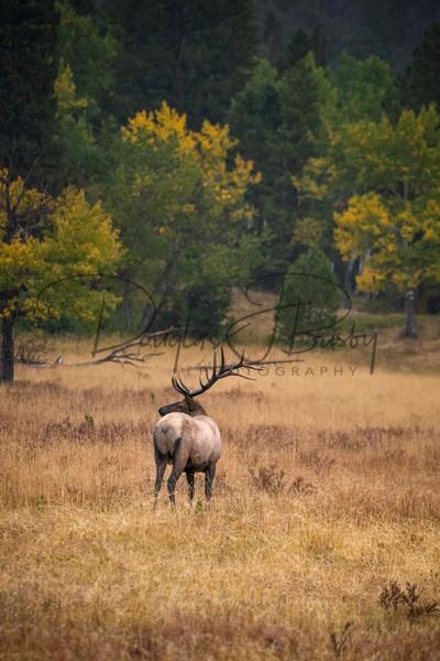 Elk, Moose, Deer & Antelope