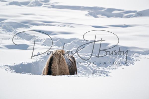 Yellowstone 2019 0952 Edit Art | dougbusby