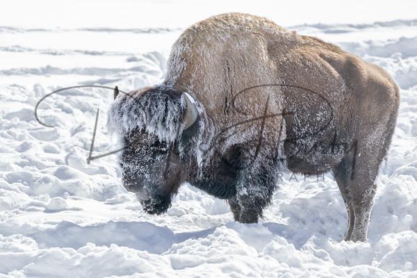 Yellowstone 2019 3792 Edit Art | dougbusby