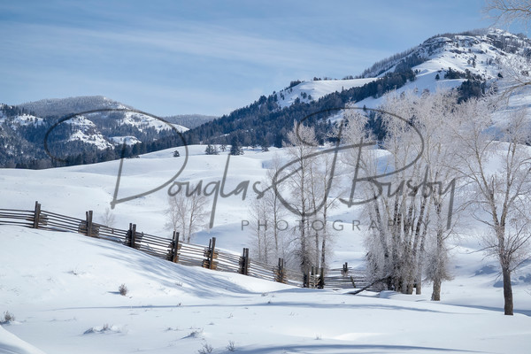 Yellowstone 2019 3714 Edit Output Art | dougbusby
