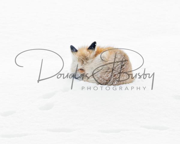 Yellowstone 2019 9345 Edit Edit Edit Output Art | dougbusby