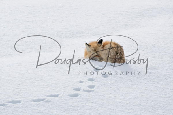 Yellowstone 2019 9457 Edit 2 Output Art | dougbusby