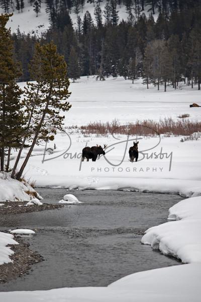 Yellowstone 3829 Edit Art | dougbusby