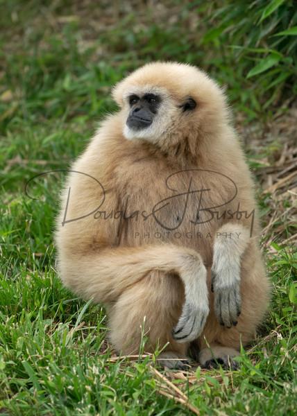 Tanganyika Zoo  11 Art | dougbusby