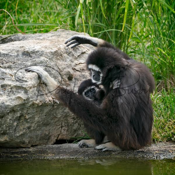 Tanganyika Zoo  9 Art | dougbusby