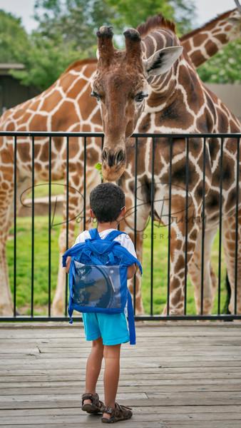 Tanganyika Zoo  2 Art | dougbusby