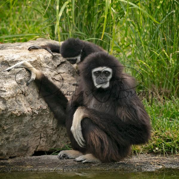 Tanganyika Zoo  7 Art | dougbusby