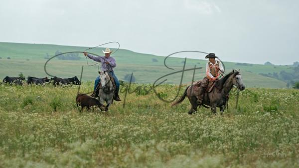 Wickstrum Ranch & Diamond S Quarter Horses