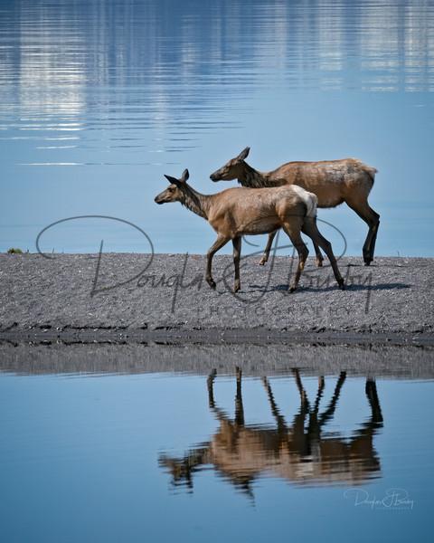 Yellowstone 2020 1226 Edit Art | dougbusby