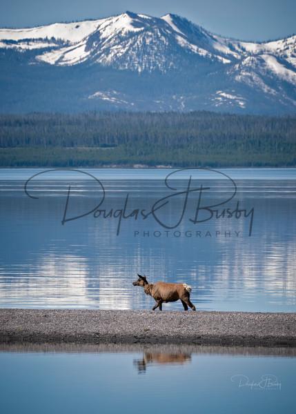 Yellowstone 2020 1055 Edit Art | dougbusby