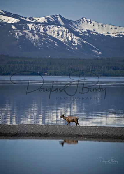 Yellowstone 2020 1109 Edit Art | dougbusby