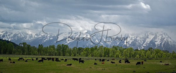 Tetons 2020  3825 Edit Art | dougbusby