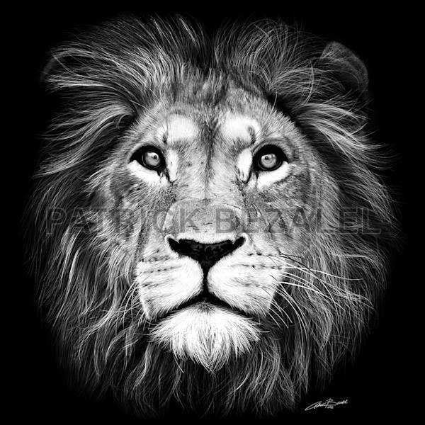 Own Limited Edition Hand-drawn Art Lion of Judah | Patrick Bezalel Fine Artist