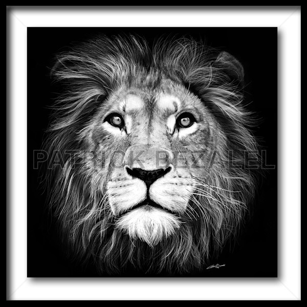 Lion Of Judah (Fine Art Print With Frame) - Prices in US$